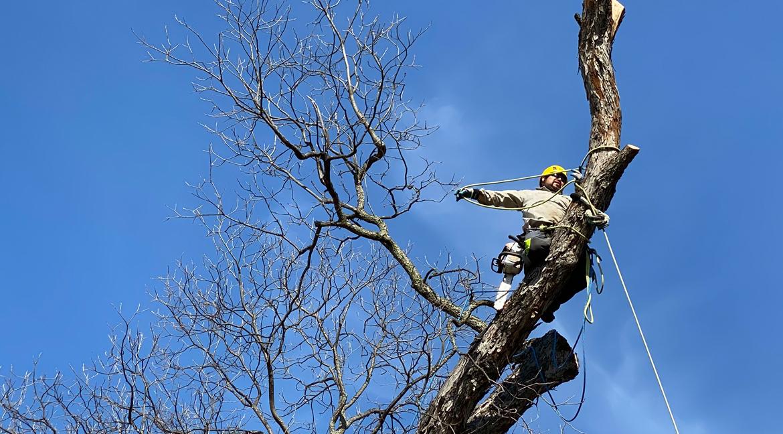 Tree/Stump Removal